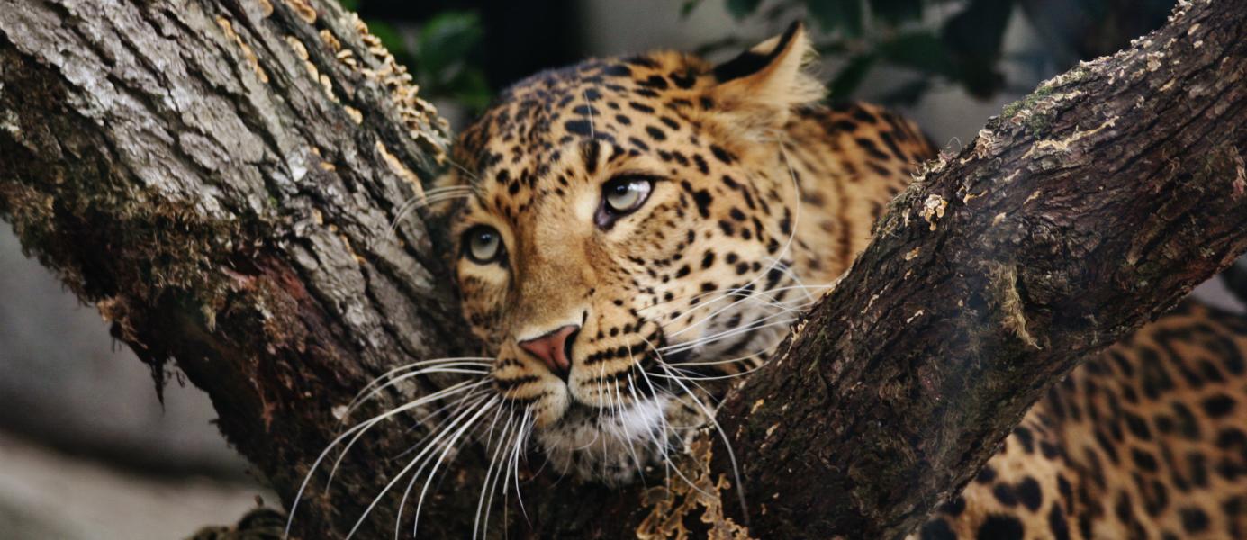 Visite zoo du jardin des plantes guide paris shunrize for Jardin animaux paris