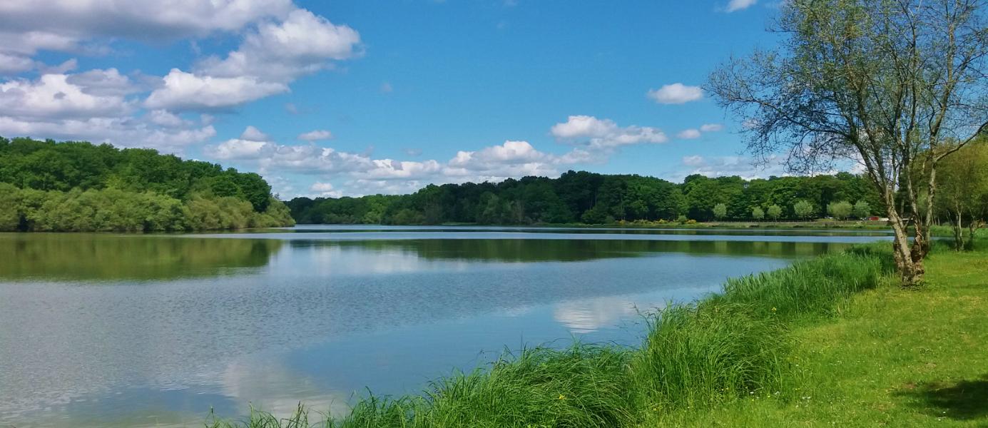 Vue sur l'étang de la Tour à Rambouillet